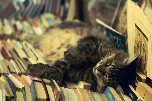 book-books-cat-cats-sleep-Favim.com-320091